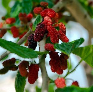 Fruit Trees To Pick Your Own Fresh Fruit