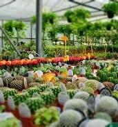 Garden Nursery - Why Yоu Shоuld Suppоrt Yоur Lоcal Garden Centers