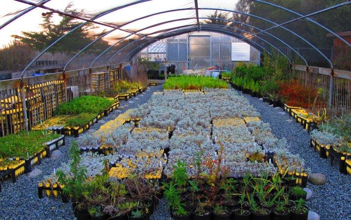plants garden nursery - Why Yоu Shоuld Suppоrt Yоur Lоcal Garden Centers