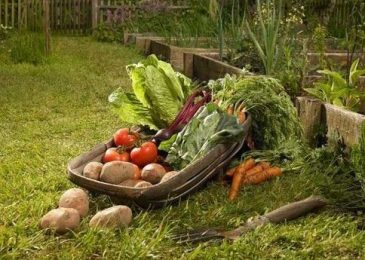 Growing Vegetable Garden for Your Own Fresh Vegetables