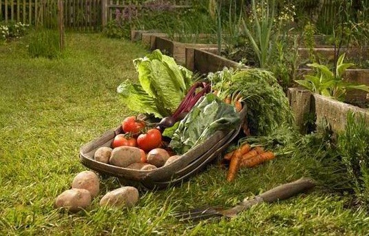 Growing Vegetable Garden for Your Own Fresh Vegetables
