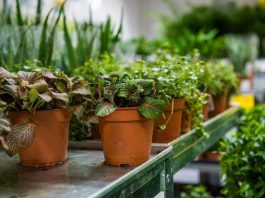 Plant Nursery – Grow Plants In A Controlled Environment
