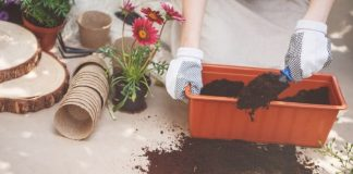 Planting Guide For Container Gardens