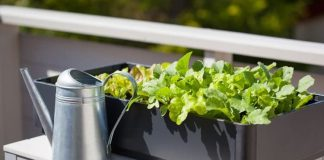 Vegetable Container Gardening Tips