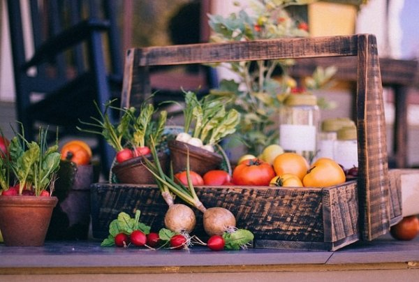 Vegetable Gardening Tips To Maintain A Successful Garden