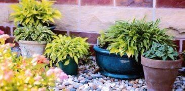 Garden Plants To Extend Growing Season