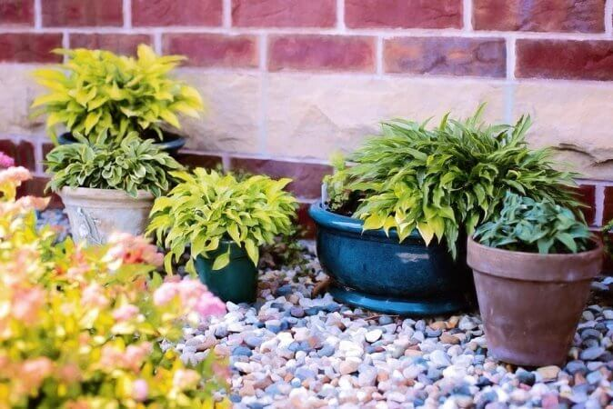 Garden Plants To Extend Growing Season
