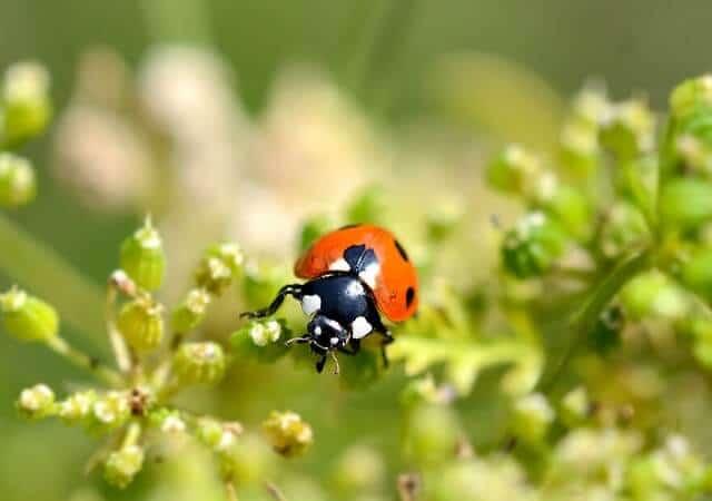 Organic Pest Control Methods For Your Organic Garden