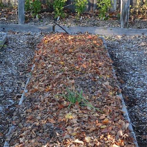 Mulch the bed before winter