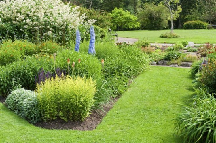 10 Great Varieties of Trees & Shrubs