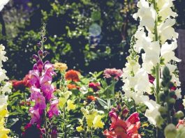 Beautiful Flower Garden Design