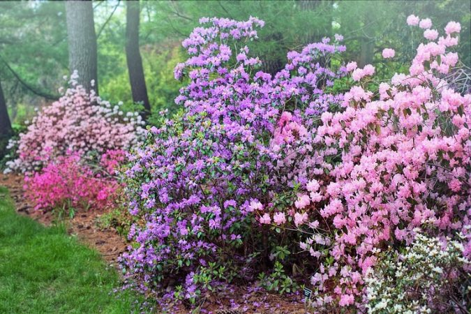 Flowering Trees and Shrubs in your Home Garden