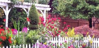 How to Create Beautiful Aromatic Cottage Garden?