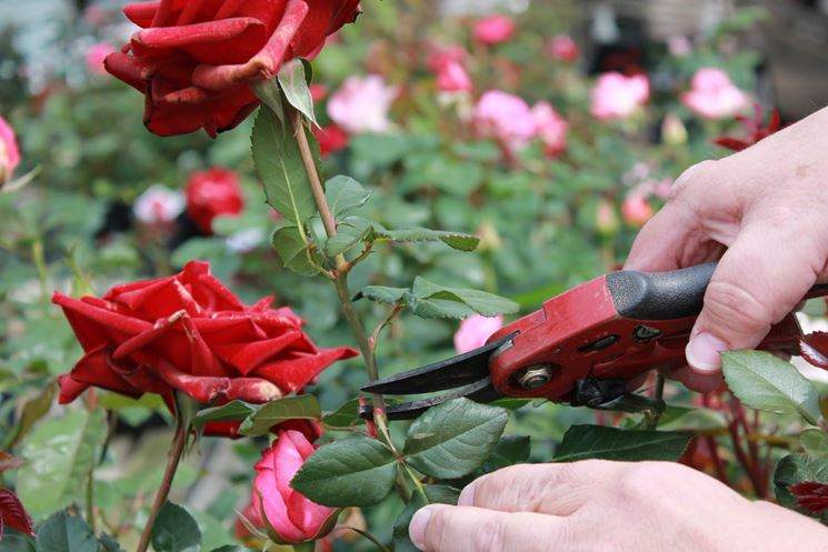 How to Prune Spring-Flowering Shrubs