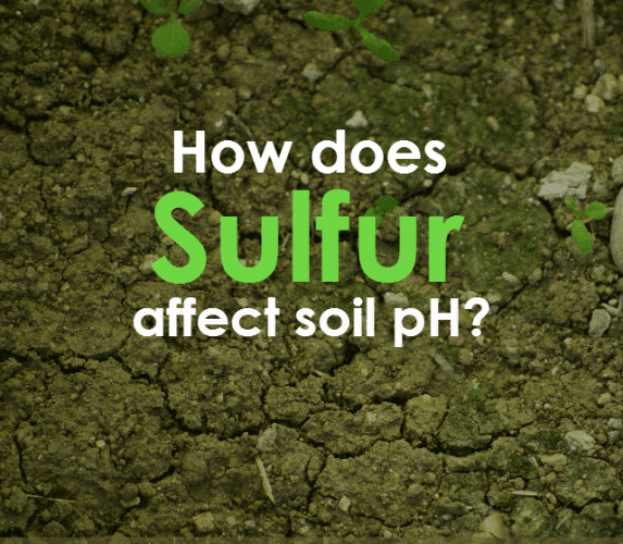Tap Into the Benefits of Garden Sulfur This Season ...