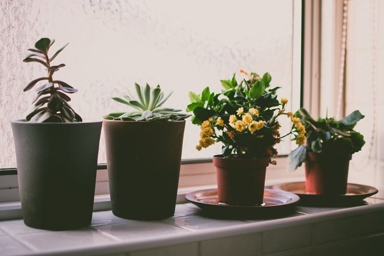 House Plants Care and Maintenance