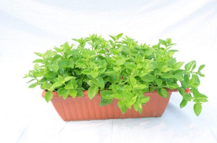 How to Grow Your Own Indoor Vegetable Garden