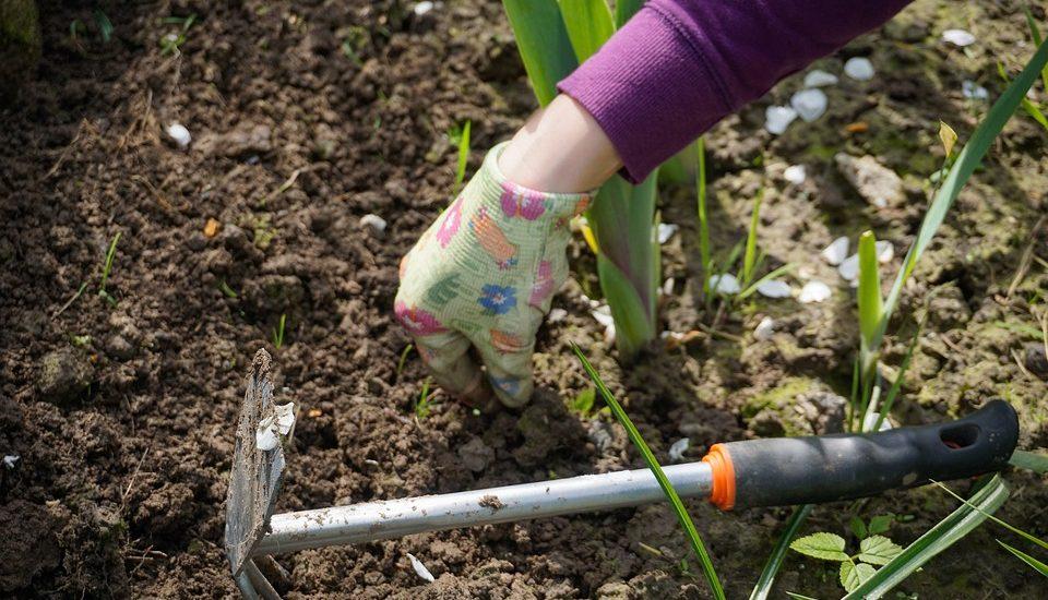 no dig garden 2