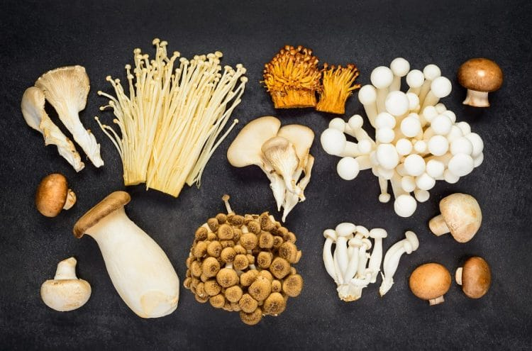 Complete Guide - Different Types of Mushrooms