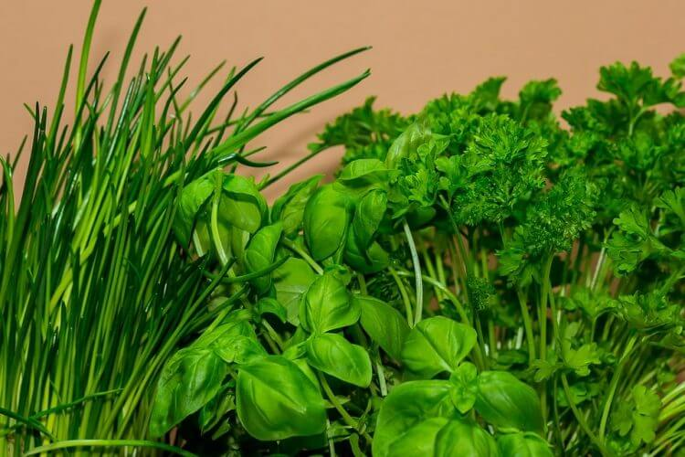 8 Herbs That Are Good to Grow in Containers