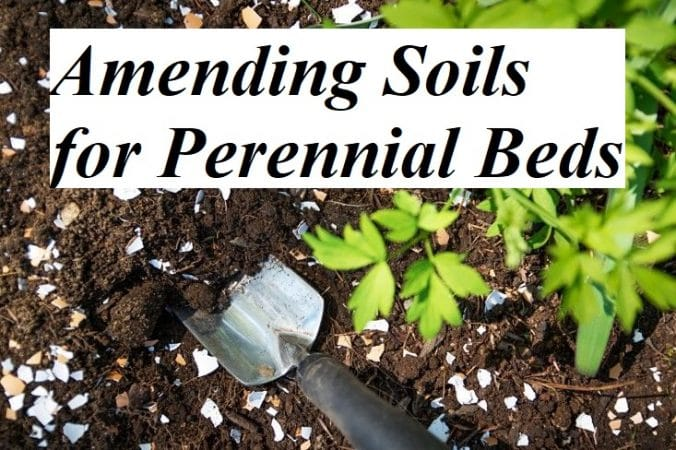 Amending Soils for Perennial Beds