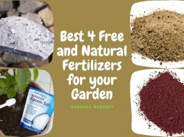 Best 4 Free and Natural Fertilizers for your Garden