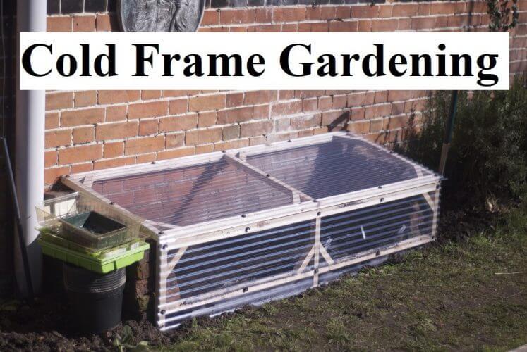 Cold Frame Gardening For a Longer Growing Season