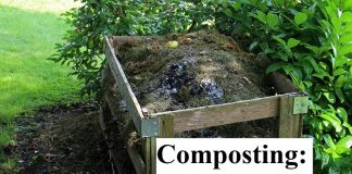 Composting: Building Healthy Soil
