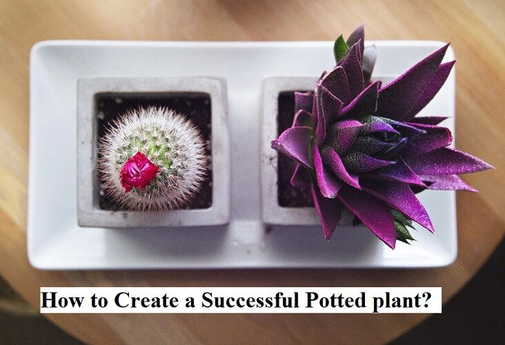 How to Create a Successful Potted plant?