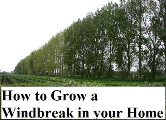 How to Grow a Windbreak in your Home Garden