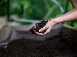 All About Soil For Vegetable Producers in Garden