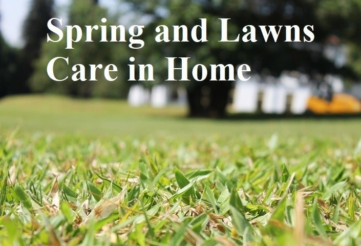 Spring and Lawns Care in Home