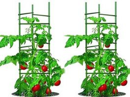 Best Types of Vegetable and Tomato Cage