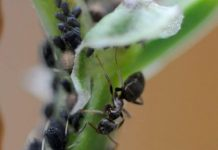 Ants - Six-Legged Gardeners