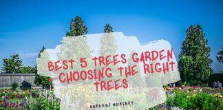 Best 5 Trees Garden - Choosing The Right Trees