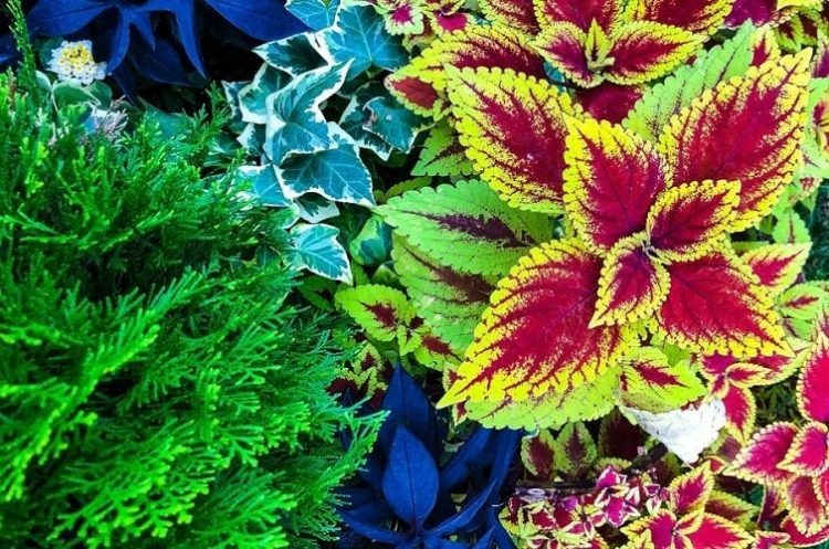 Designing With Annuals and Perennials