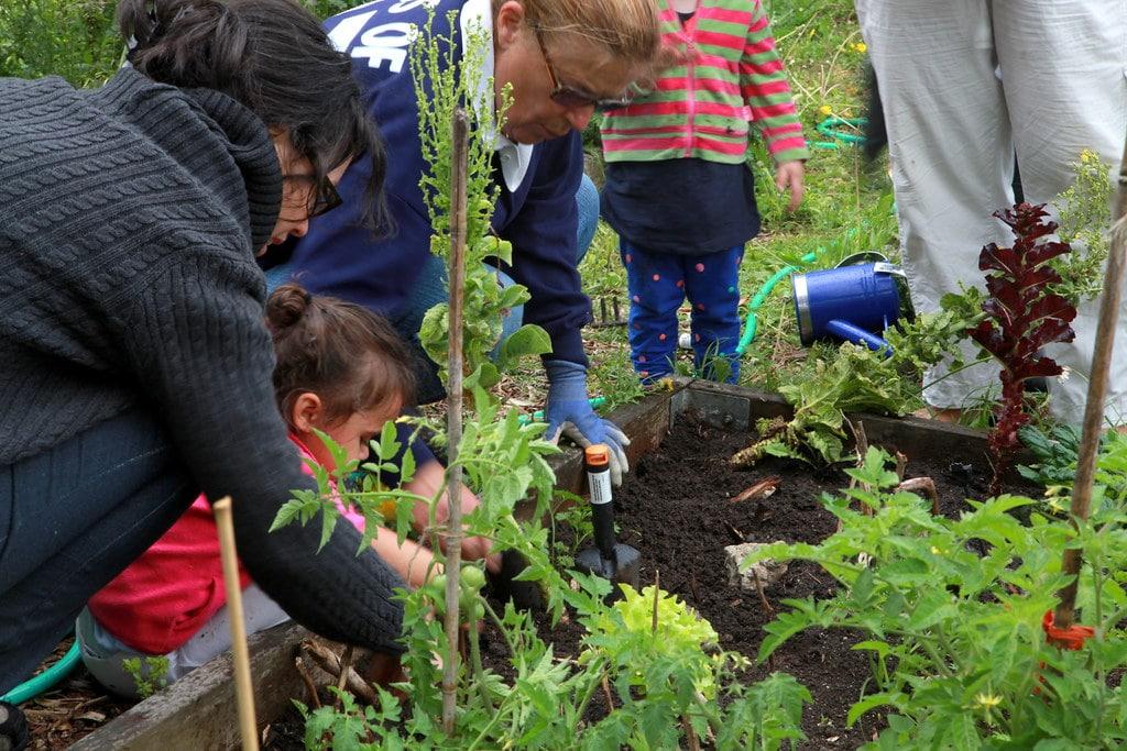 Family Gardening and Market Gardening