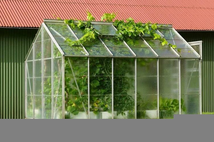 Greenhouse Buyers Guide