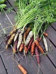How to Grow Carrots in your Home Garden