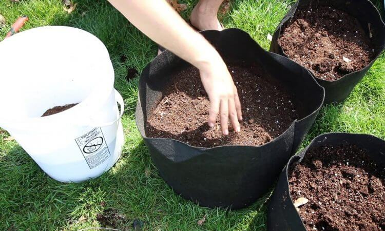 How to Grow Potatoes In A Bucket
