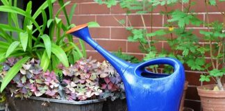 How to Water Garden Plants