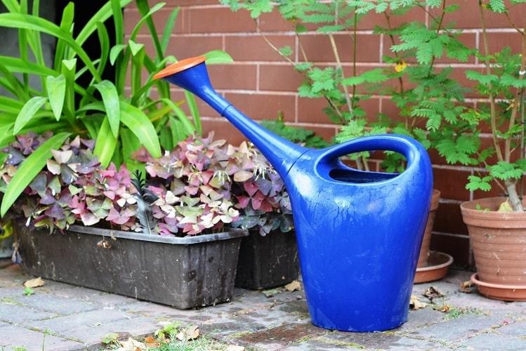 How to Water Garden Plants