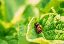 Quick Guide For Best Natural Pest Controls