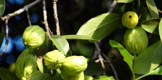 Trees and Shrubs that Produce Edible Fruit