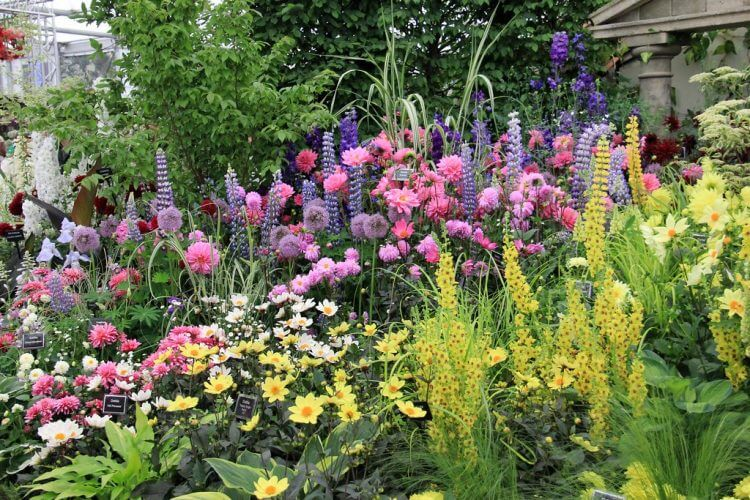 Welcome Perennial Culinary Herbs Into your Landscape