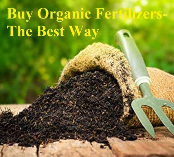 Buy Organic Fertilizers- The Best Way
