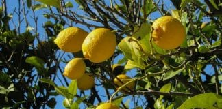 Choose the Right Fruit Tree for Your Garden