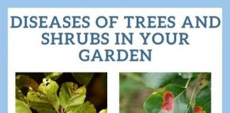 Diseases of Trees and Shrubs in your Garden