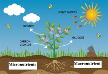 17 Essential Plant Nutrients for Plant Growth