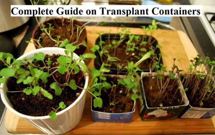 Complete Guide on Transplant Containers